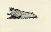 Bull near Grantchester, 1956 (pen & ink on paper)